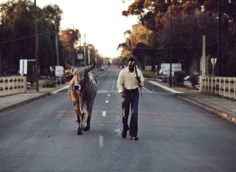Grey Bull: ShortFilm